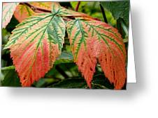 Fall Veins Greeting Card