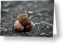 Fallen Acorn  Greeting Card