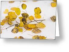 Fallen Autumn Aspen Leaves Greeting Card