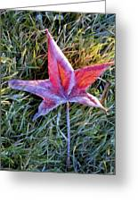 Fallen Autumn Leaf In The Grass During Morning Frost Greeting Card