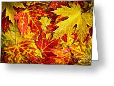 Fallen Autumn Maple Leaves  Greeting Card