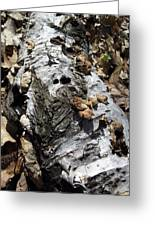 Fallen Birch Greeting Card