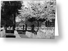 Fallen - Black And White Greeting Card