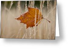 Fallen Color Greeting Card