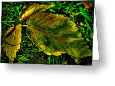 Fallen Elm Leaves Greeting Card