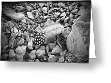 Fallen Feathers Black And White Greeting Card