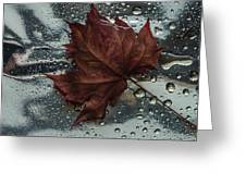 Fallen Leaf Greeting Card by Vladimir Kholostykh