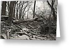 Fallen Soldiers Of The Forest Greeting Card