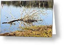 Fallen Tree Greeting Card by Douglas Barnard
