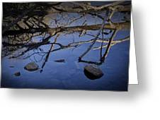Fallen Tree Trunk With Reflections On The Muskegon Rive Greeting Card