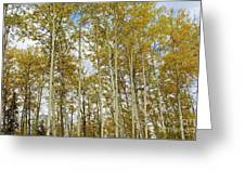 Falling For The Birch And Aspens Greeting Card
