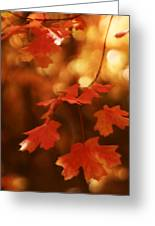 Falling Into Autumn Greeting Card