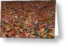Falling Leaves Greeting Card