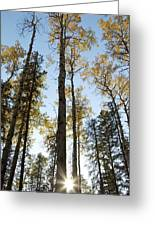 Falling Sunlight Fort Mcmurray Greeting Card