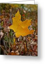 Falling To Earth Greeting Card