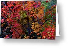 Falls Fiery Rainbow Greeting Card