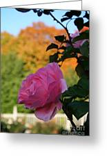 Fall's Final Rose Greeting Card