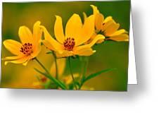 Falls Glory Greeting Card
