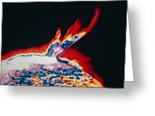 False-colour Skylab Image Of A Solar Prominence Greeting Card