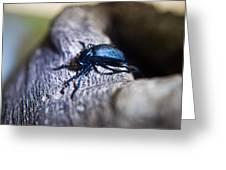 False Darkling Beetle 30 Greeting Card