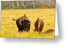 Familial Grazing Greeting Card