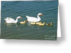 Family Outing On The Lake Greeting Card