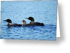 Family Swim 3 Greeting Card