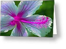 Fanciful Hibiscus Greeting Card