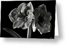 Fancy Amaryllis In Black And White Greeting Card