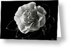 Fancy Camellia In Black And White Greeting Card