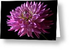 Fancy Dahlia Greeting Card