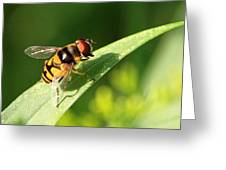 Fancy Fly Greeting Card