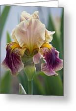 Fancy Iris Dance Ruffles Greeting Card