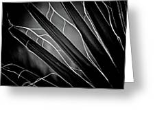 Fanned Leaves Greeting Card
