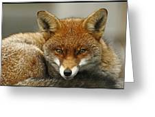 Fantastic Mr Fox Greeting Card by Jacqui Collett