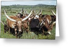 Fantastically Long-horned Ankole Cattle Greeting Card