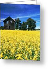Farm House And Canola Field, Holland Greeting Card