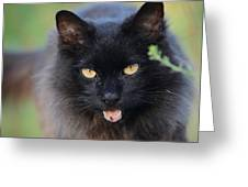 Farm Kitty Greeting Card