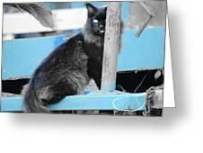 Farm Kitty On Blue Wagon Greeting Card