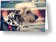 Airedale On The Fashion Runway Greeting Card
