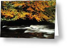 Fast Flowing Water And Fall Colours Greeting Card