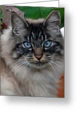 Fat Cats Of Ballard 9 Greeting Card
