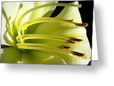 Favorite White Lily Greeting Card