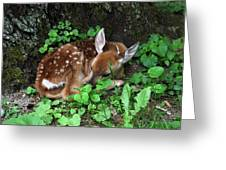 Fawn 2292 Greeting Card