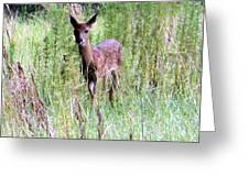 Fawn II Greeting Card