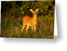 Fawn In Forest At Dusk Greeting Card