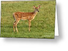 Fawn Ventures Out  Greeting Card