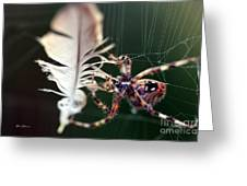 Feather And Spider Greeting Card