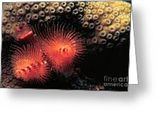 Feather Duster Feeding 4 Greeting Card