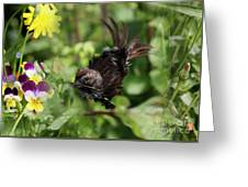 Feather Flash Greeting Card